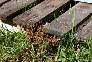 Ground Swarm